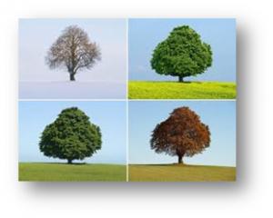 trees-300x240